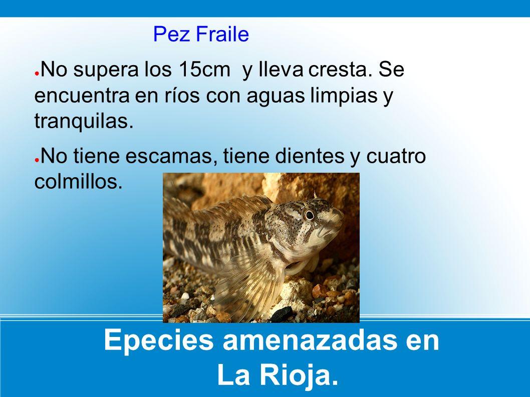Epecies amenazadas en La Rioja.