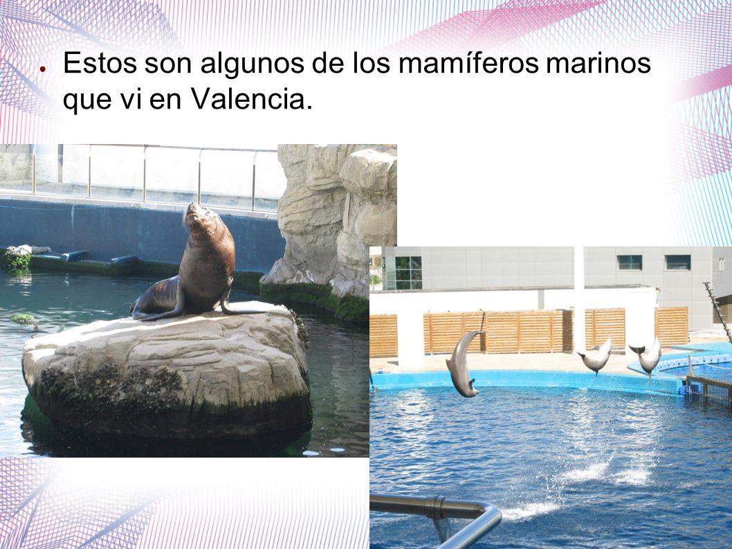 Estos son algunos de los mamíferos marinos que vi en Valencia.