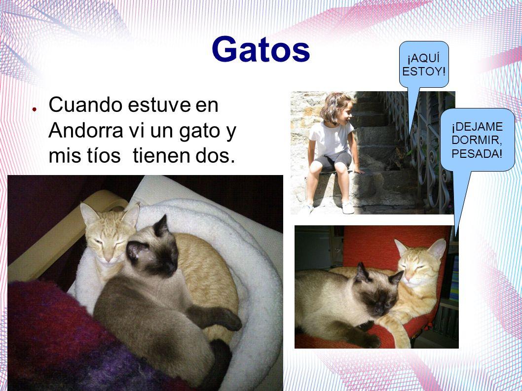 Gatos Cuando estuve en Andorra vi un gato y mis tíos tienen dos. ¡AQUÍ