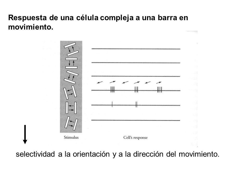Respuesta de una célula compleja a una barra en movimiento.