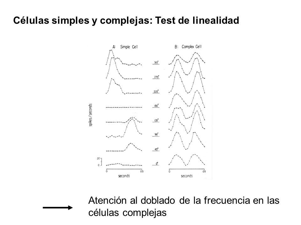 Células simples y complejas: Test de linealidad