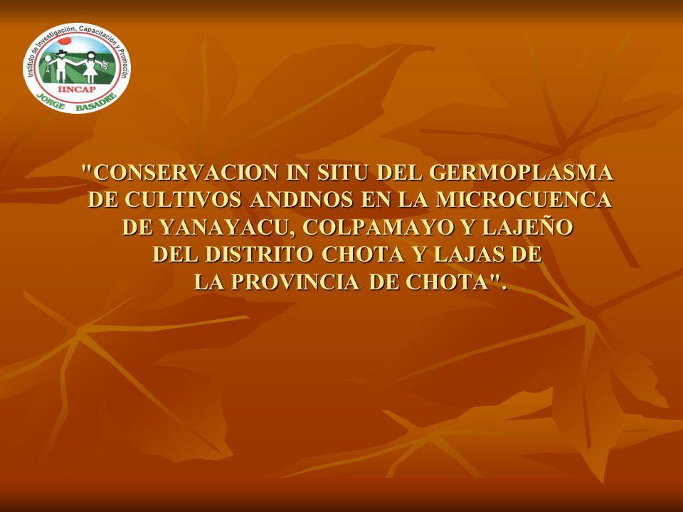 CONSERVACION IN SITU DEL GERMOPLASMA DE CULTIVOS ANDINOS EN LA MICROCUENCA DE YANAYACU, COLPAMAYO Y LAJEÑO DEL DISTRITO CHOTA Y LAJAS DE LA PROVINCIA DE CHOTA .