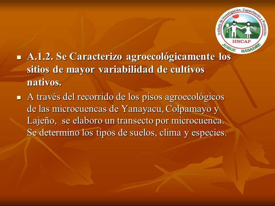 A.1.2. Se Caracterizo agroecológicamente los sitios de mayor variabilidad de cultivos nativos.