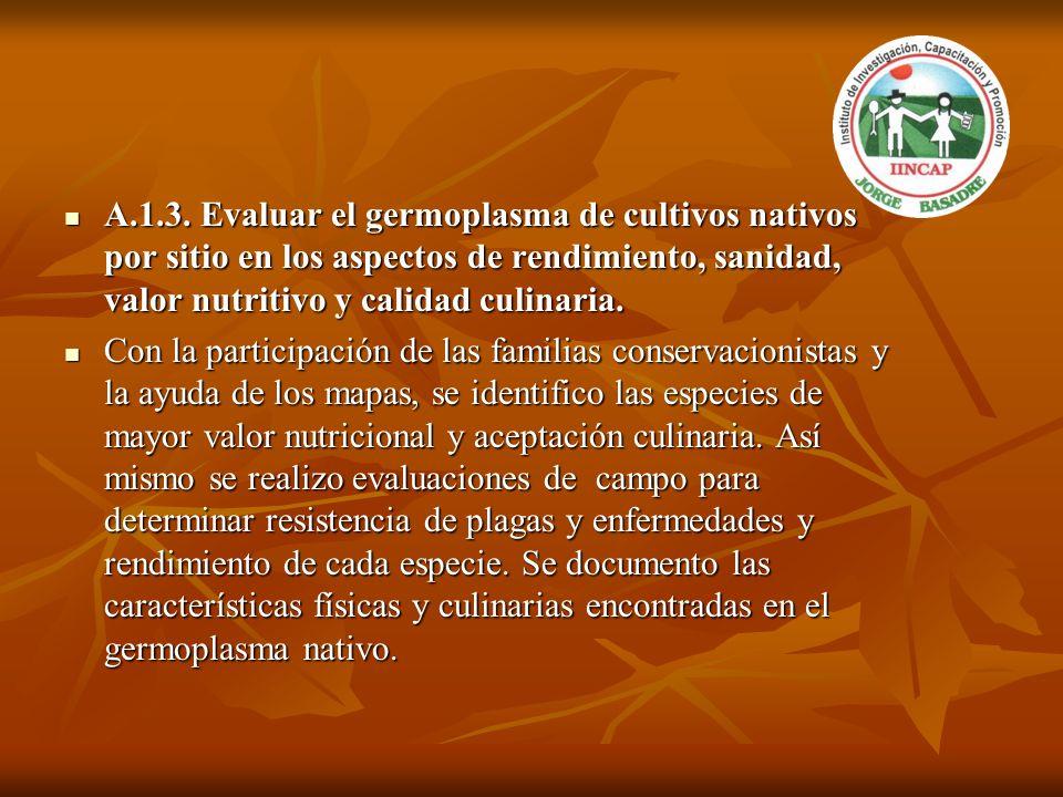 A.1.3. Evaluar el germoplasma de cultivos nativos por sitio en los aspectos de rendimiento, sanidad, valor nutritivo y calidad culinaria.