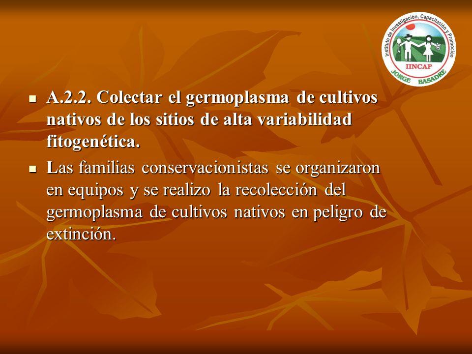 A.2.2. Colectar el germoplasma de cultivos nativos de los sitios de alta variabilidad fitogenética.