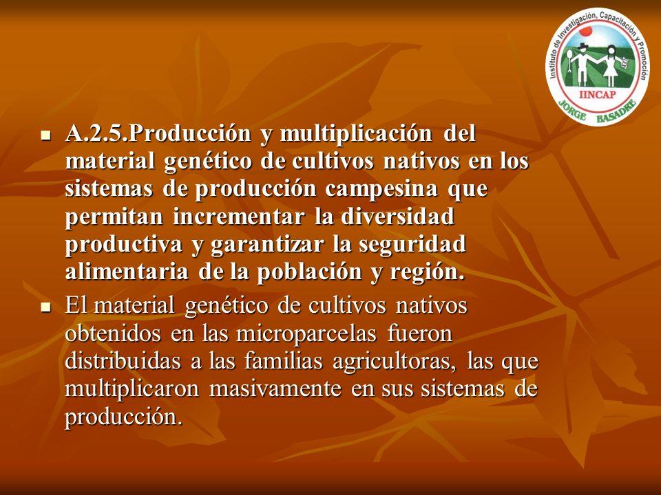 A.2.5.Producción y multiplicación del material genético de cultivos nativos en los sistemas de producción campesina que permitan incrementar la diversidad productiva y garantizar la seguridad alimentaria de la población y región.