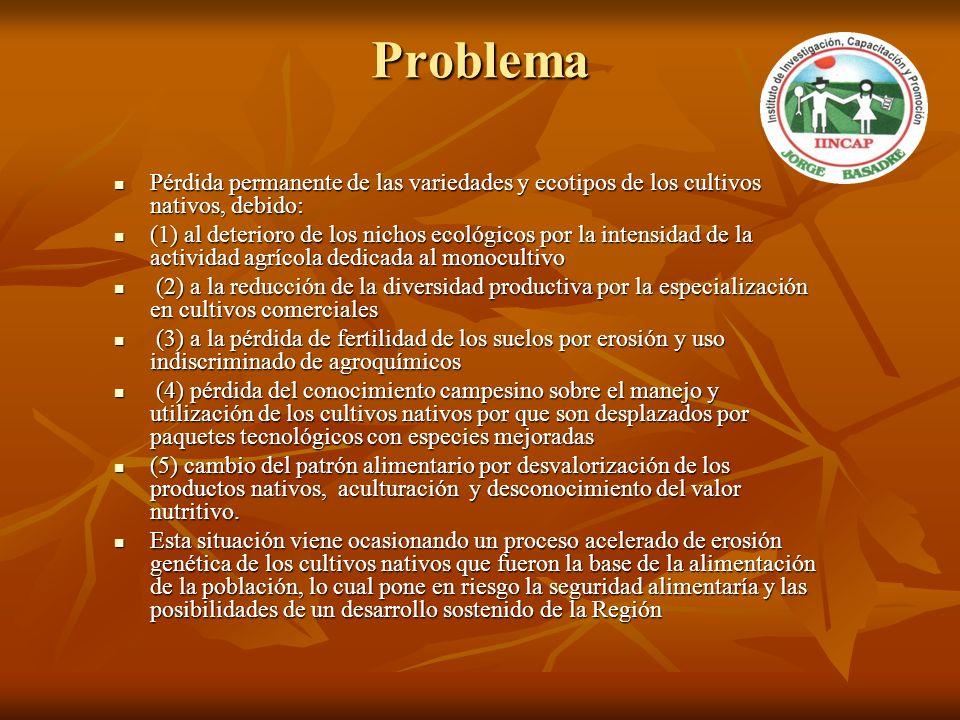 Problema Pérdida permanente de las variedades y ecotipos de los cultivos nativos, debido: