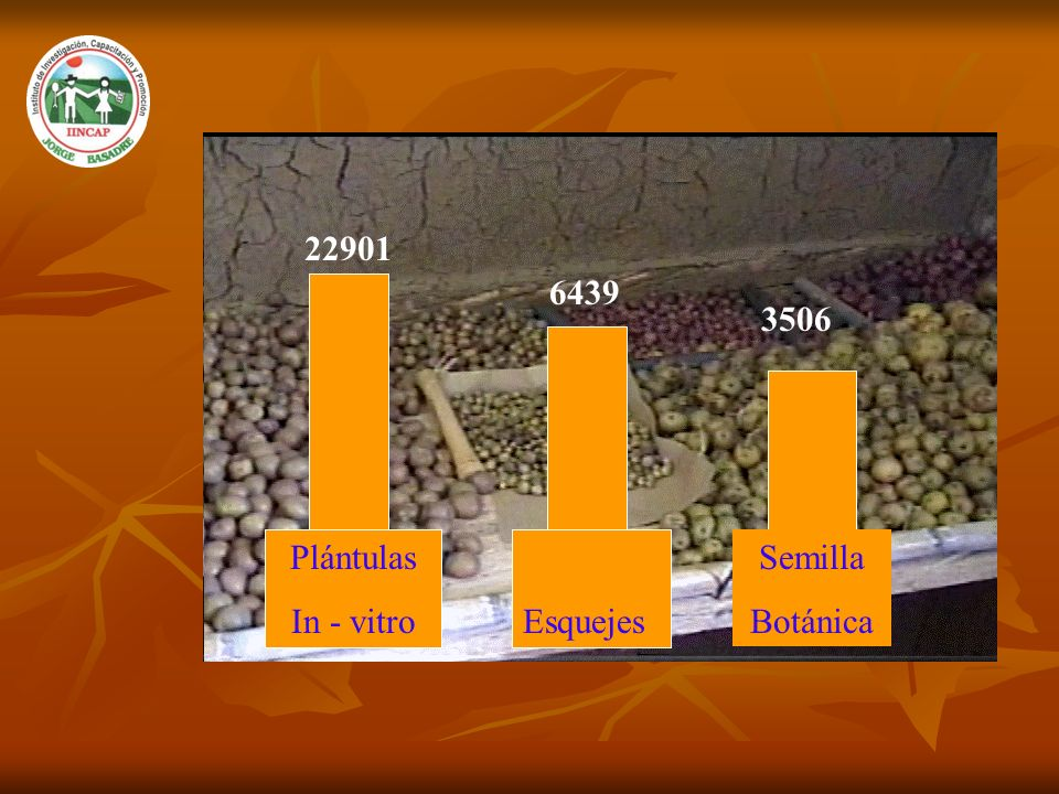 22901 6439 3506 Plántulas In - vitro Esquejes Semilla Botánica