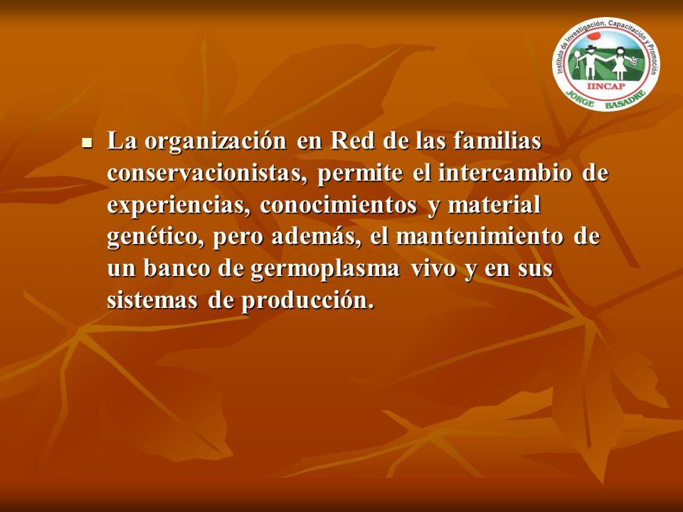 La organización en Red de las familias conservacionistas, permite el intercambio de experiencias, conocimientos y material genético, pero además, el mantenimiento de un banco de germoplasma vivo y en sus sistemas de producción.