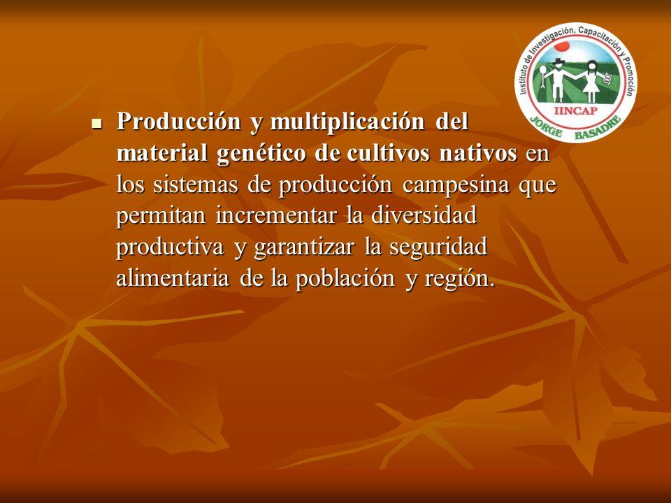 Producción y multiplicación del material genético de cultivos nativos en los sistemas de producción campesina que permitan incrementar la diversidad productiva y garantizar la seguridad alimentaria de la población y región.