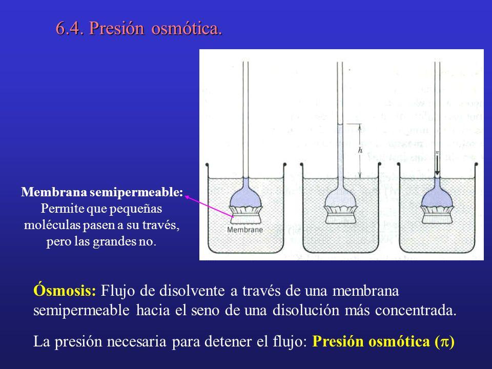 6.4. Presión osmótica. Membrana semipermeable: Permite que pequeñas moléculas pasen a su través, pero las grandes no.