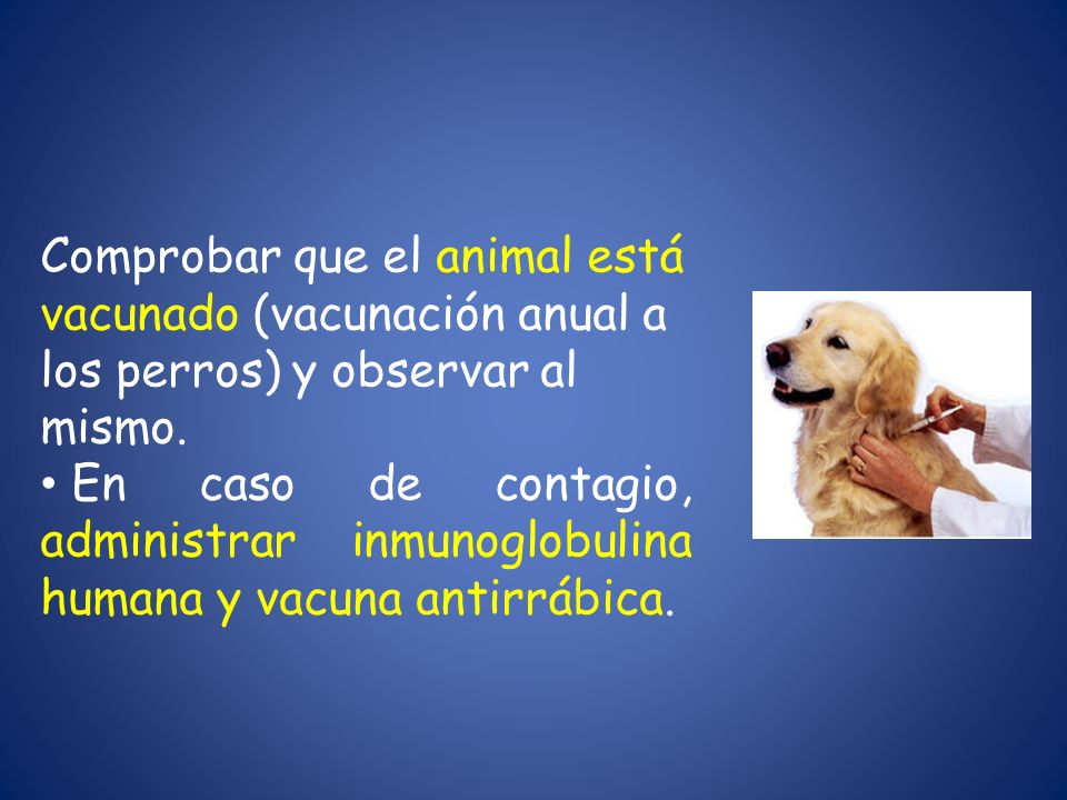 Comprobar que el animal está vacunado (vacunación anual a los perros) y observar al mismo.