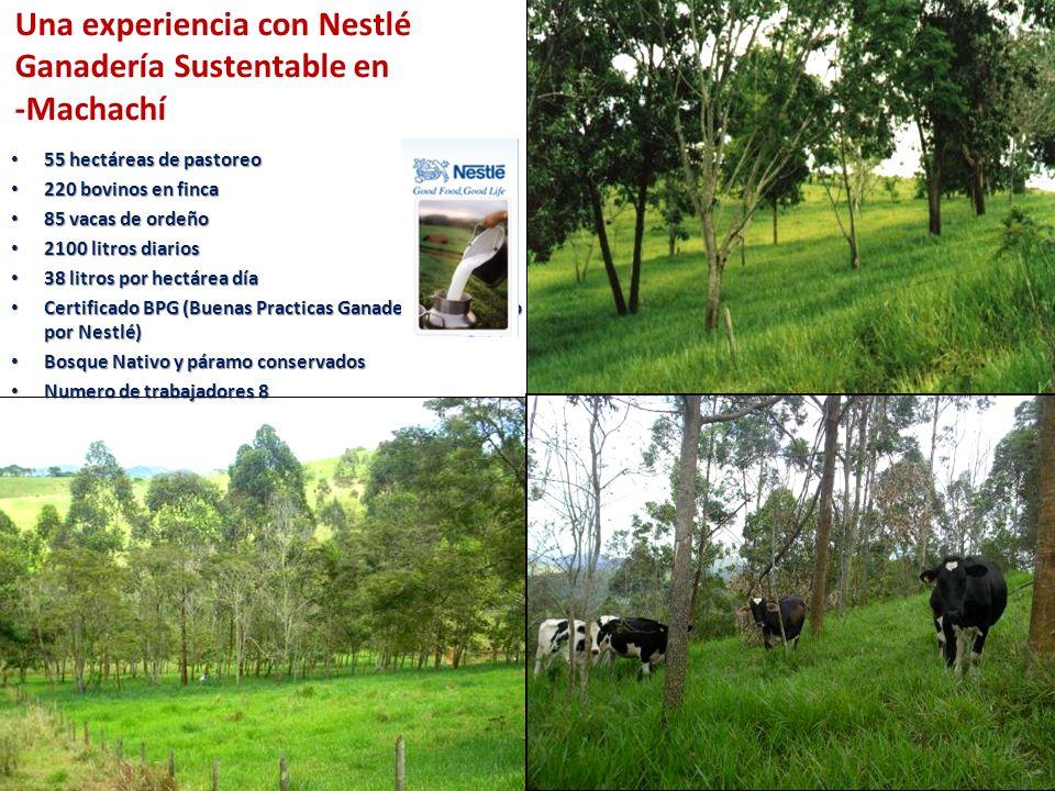 Una experiencia con Nestlé Ganadería Sustentable en -Machachí