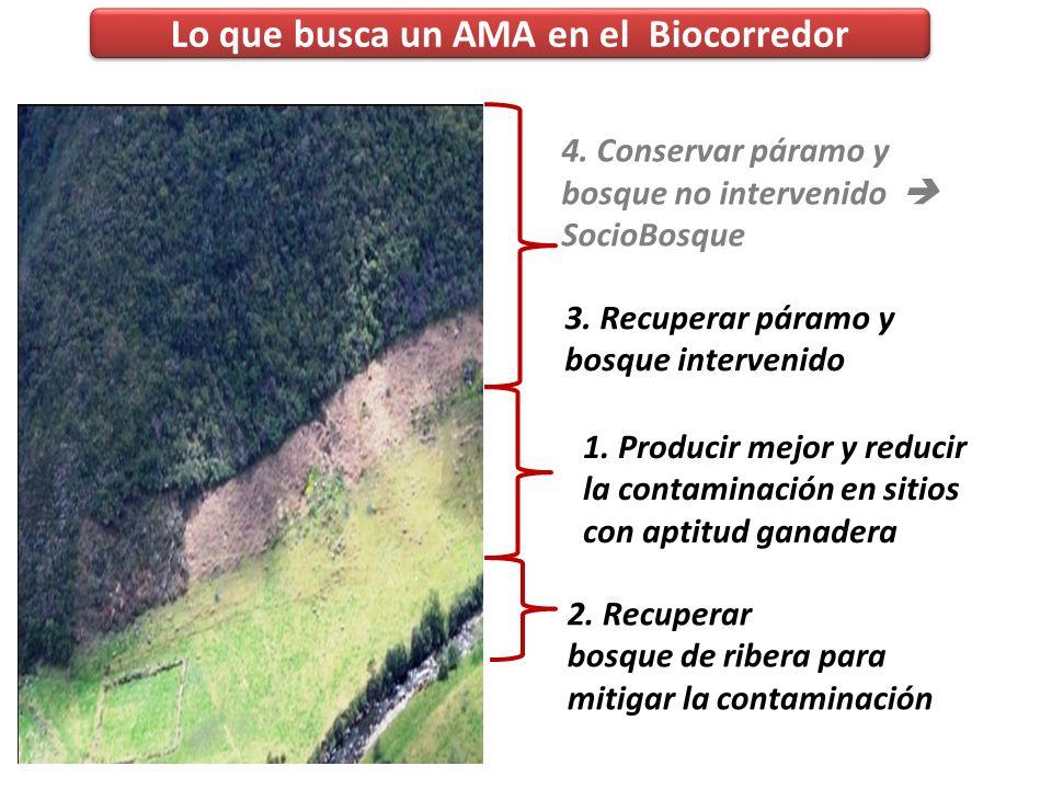 Lo que busca un AMA en el Biocorredor