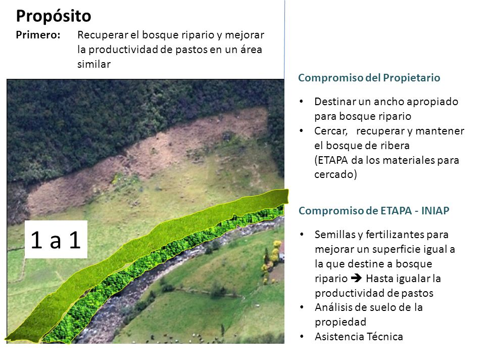 Propósito Primero: Recuperar el bosque ripario y mejorar la productividad de pastos en un área similar.