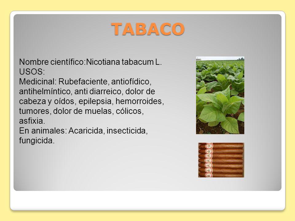 TABACO Nombre científico:Nicotiana tabacum L.