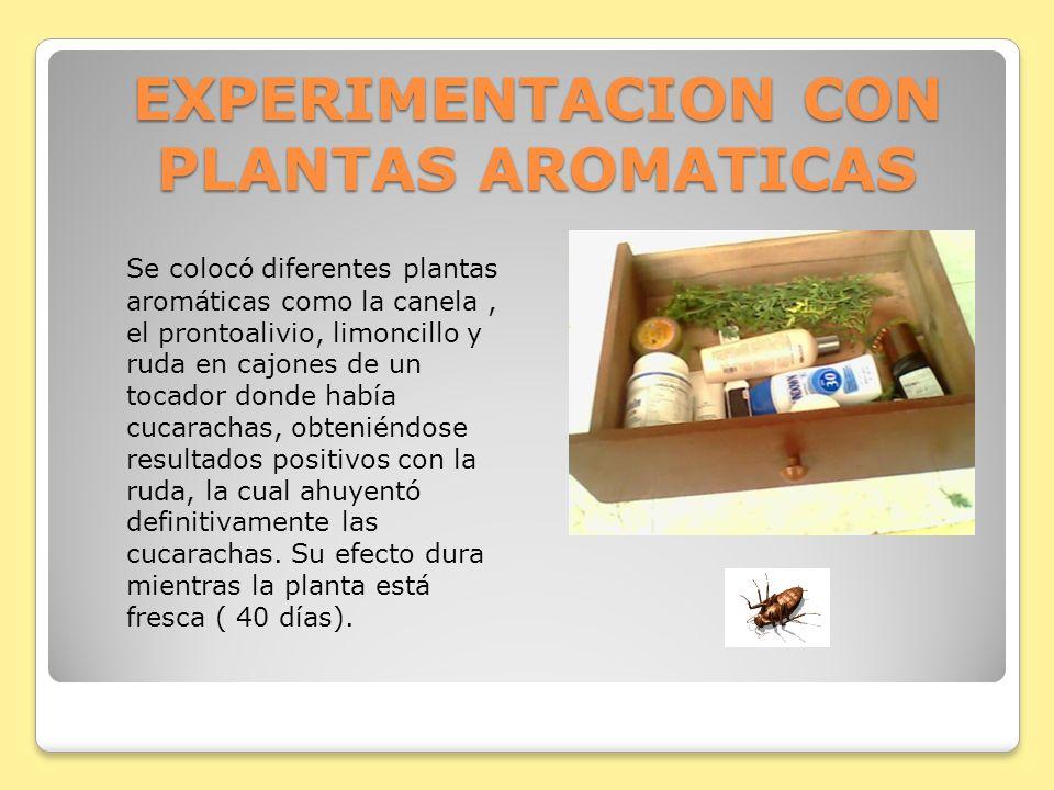 EXPERIMENTACION CON PLANTAS AROMATICAS