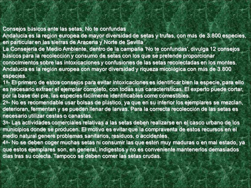 Consejos básicos ante las setas, No te confundas Andalucía es la región europea de mayor diversidad de setas y trufas, con más de 3.800 especies, en particular en las sierras de Aracena y Norte de Sevilla