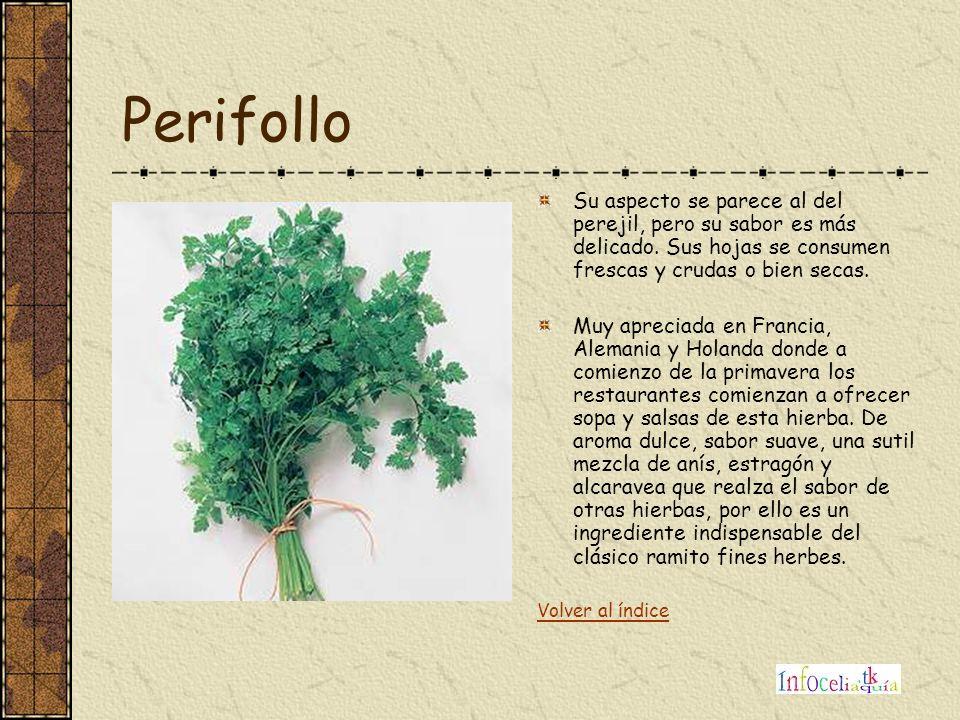Perifollo Su aspecto se parece al del perejil, pero su sabor es más delicado. Sus hojas se consumen frescas y crudas o bien secas.