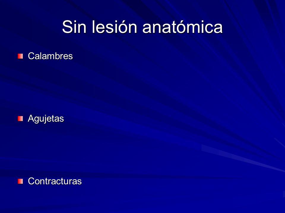 Sin lesión anatómica Calambres Agujetas Contracturas