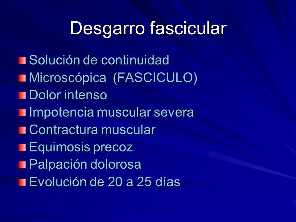 Desgarro fascicular Solución de continuidad Microscópica (FASCICULO)