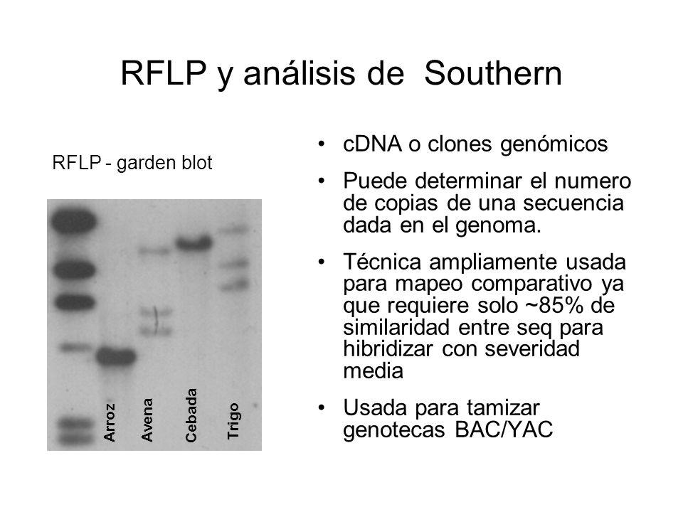 RFLP y análisis de Southern
