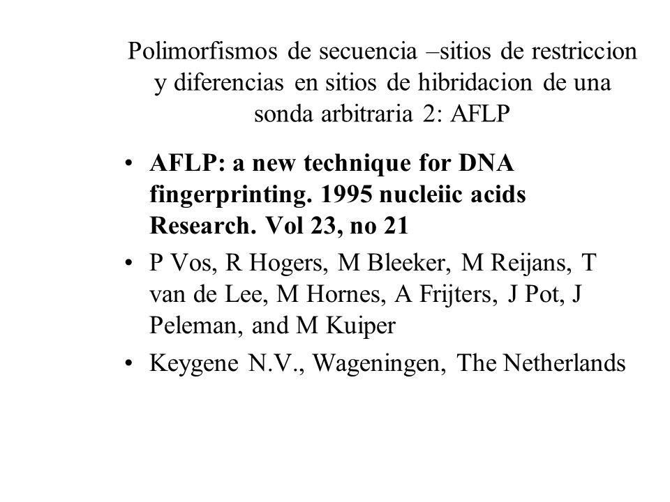 Polimorfismos de secuencia –sitios de restriccion y diferencias en sitios de hibridacion de una sonda arbitraria 2: AFLP