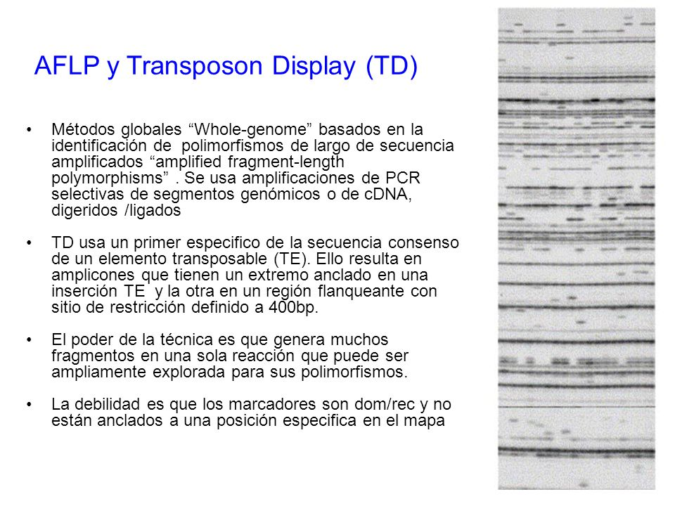 AFLP y Transposon Display (TD)