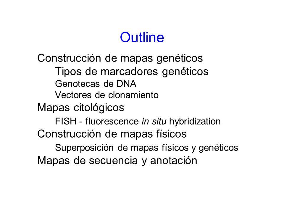 Outline Construcción de mapas genéticos Tipos de marcadores genéticos