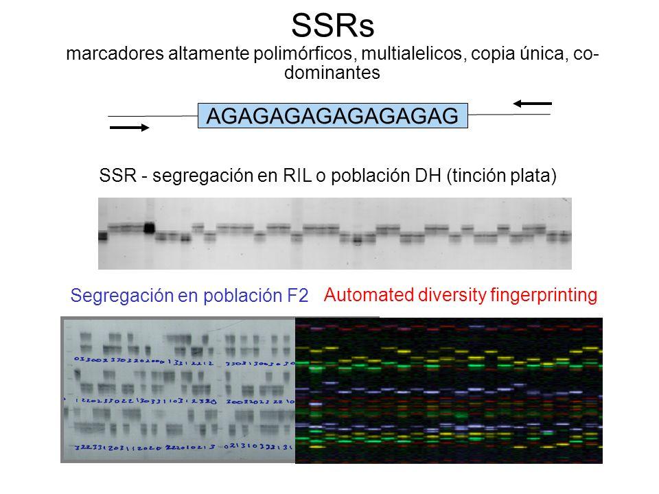 SSRs marcadores altamente polimórficos, multialelicos, copia única, co-dominantes