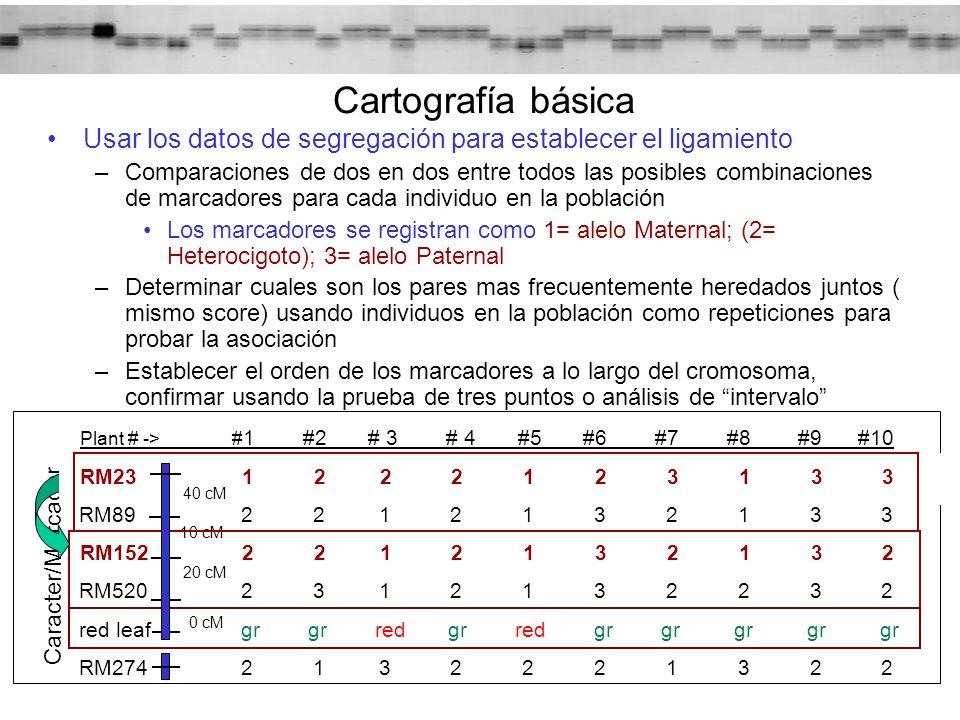 Cartografía básica Usar los datos de segregación para establecer el ligamiento.