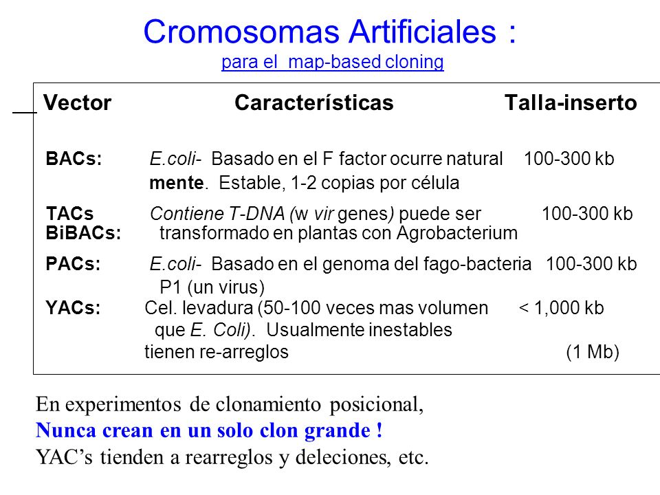 Cromosomas Artificiales : para el map-based cloning