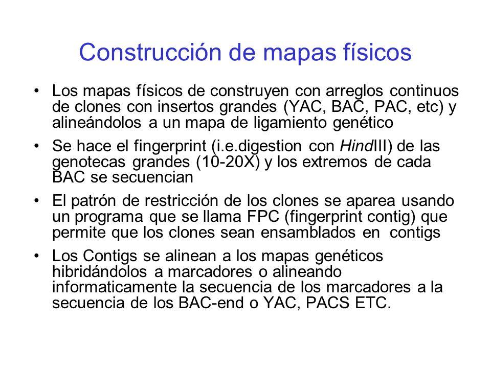 Construcción de mapas físicos