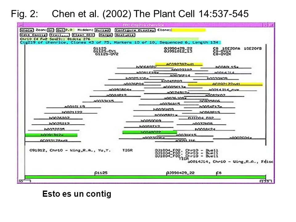 Fig. 2: Chen et al. (2002) The Plant Cell 14:537-545