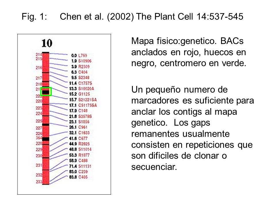 Fig. 1: Chen et al. (2002) The Plant Cell 14:537-545