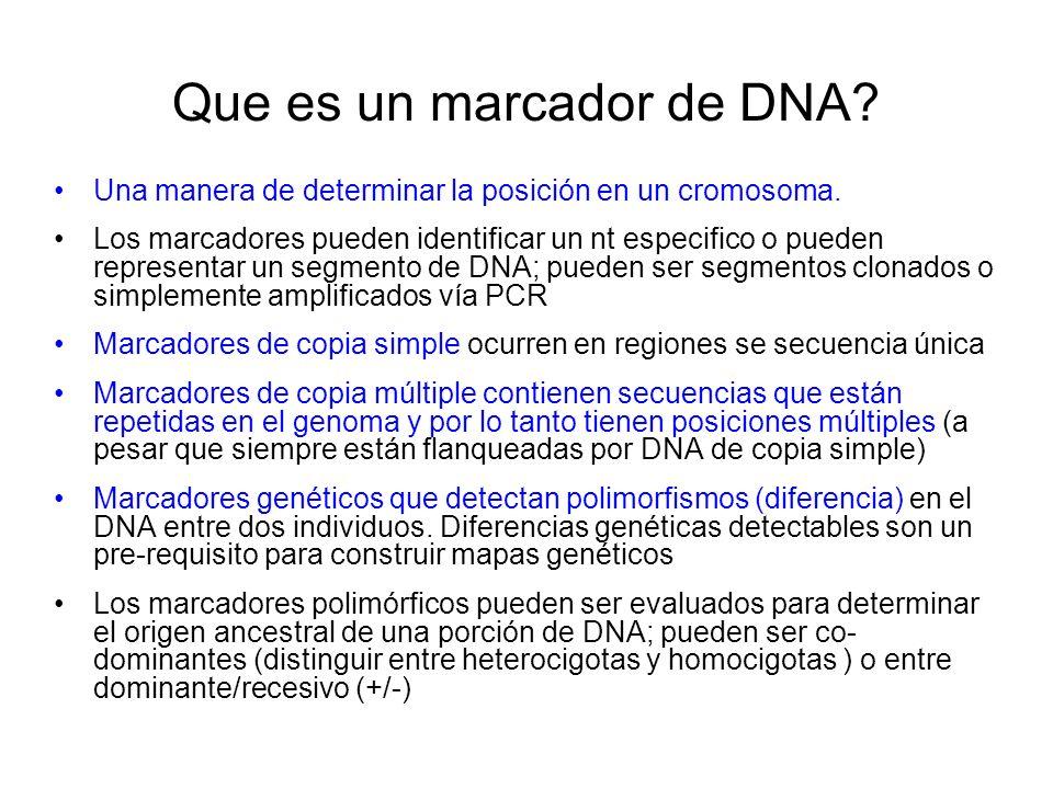 Que es un marcador de DNA