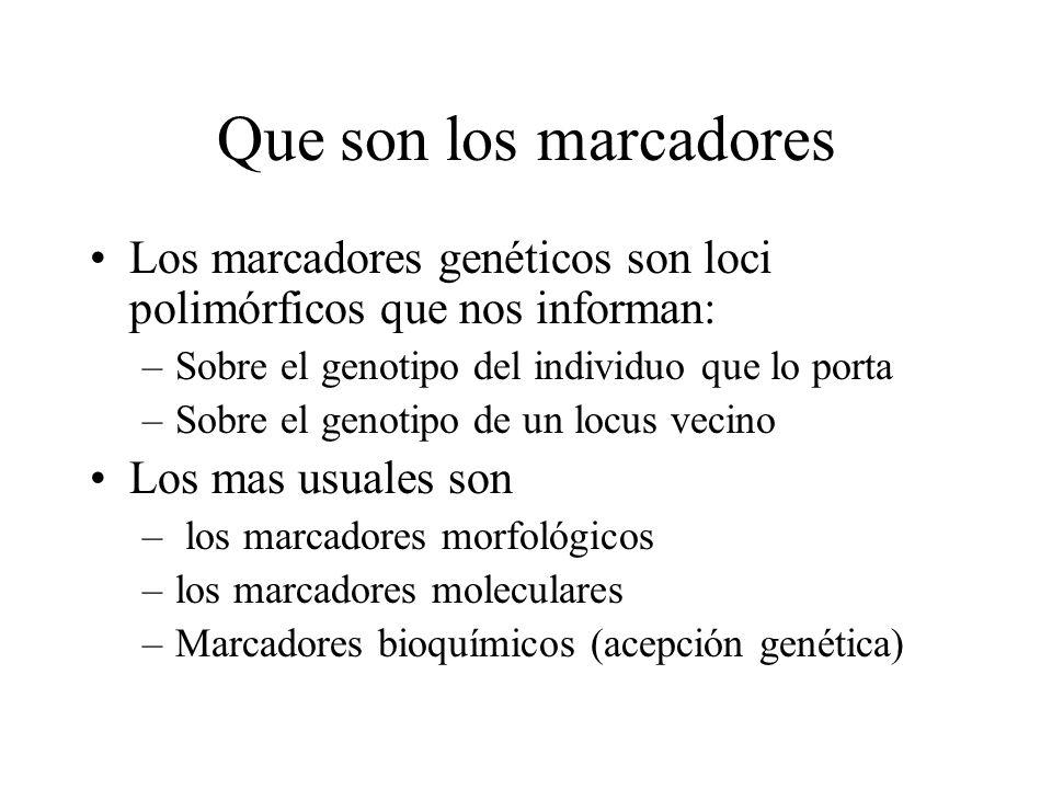 Que son los marcadores Los marcadores genéticos son loci polimórficos que nos informan: Sobre el genotipo del individuo que lo porta.