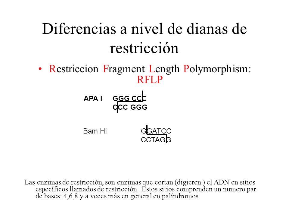 Diferencias a nivel de dianas de restricción