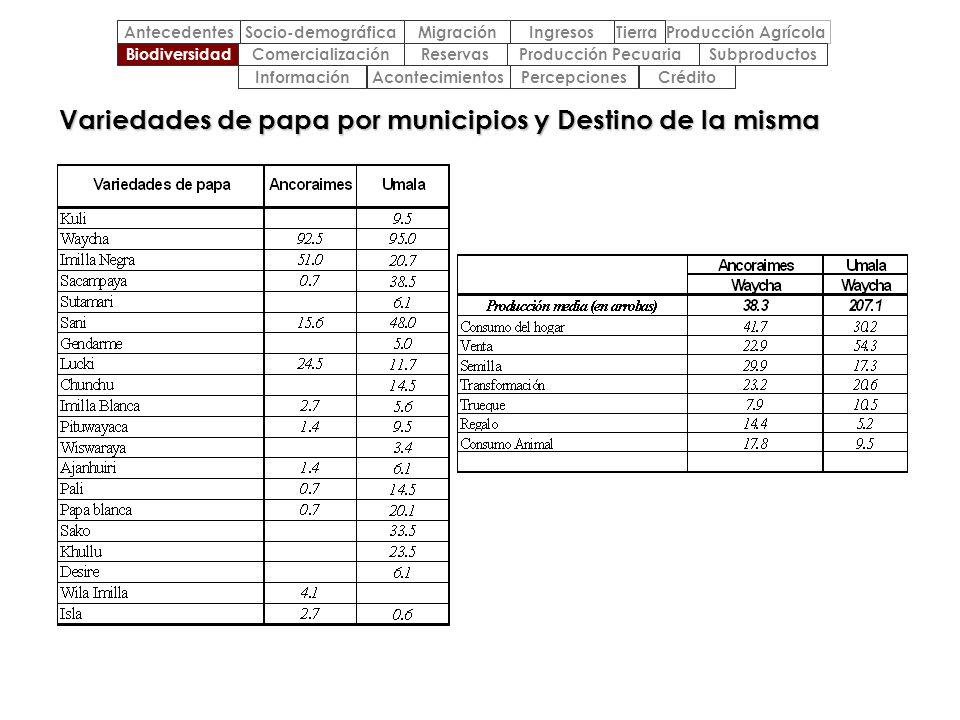 Variedades de papa por municipios y Destino de la misma