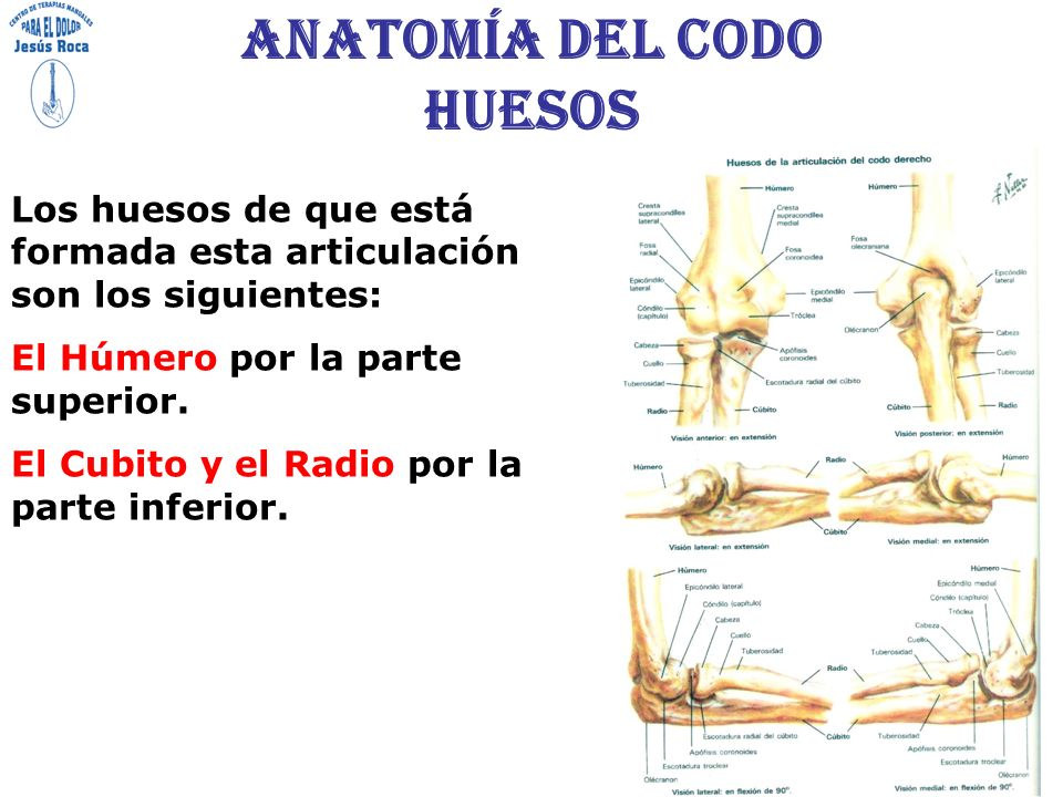 Perfecto Huesos Del Codo Fotos - Anatomía de Las Imágenesdel Cuerpo ...