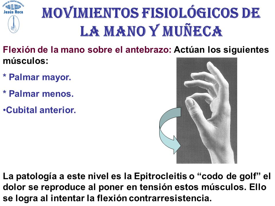 Asombroso Anatomía Y Fisiología De La Mano Elaboración - Imágenes de ...