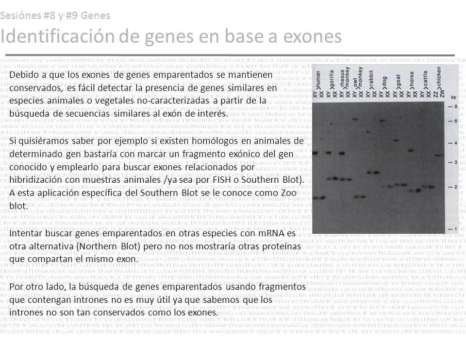 Sesiónes #8 y #9 Genes Identificación de genes en base a exones