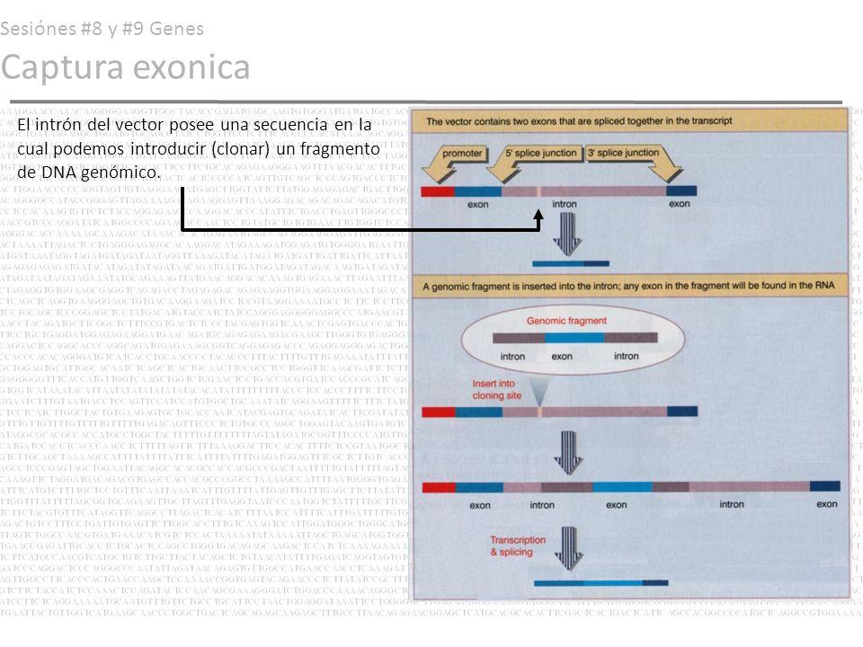 Sesiónes #8 y #9 Genes Captura exonica