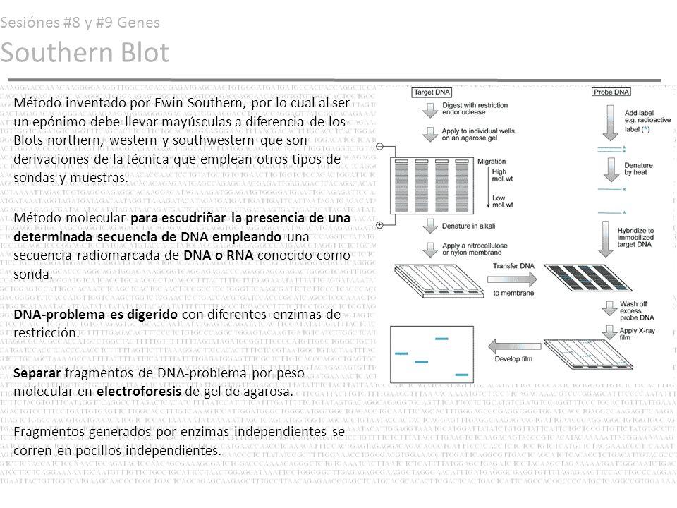 Sesiónes #8 y #9 Genes Southern Blot