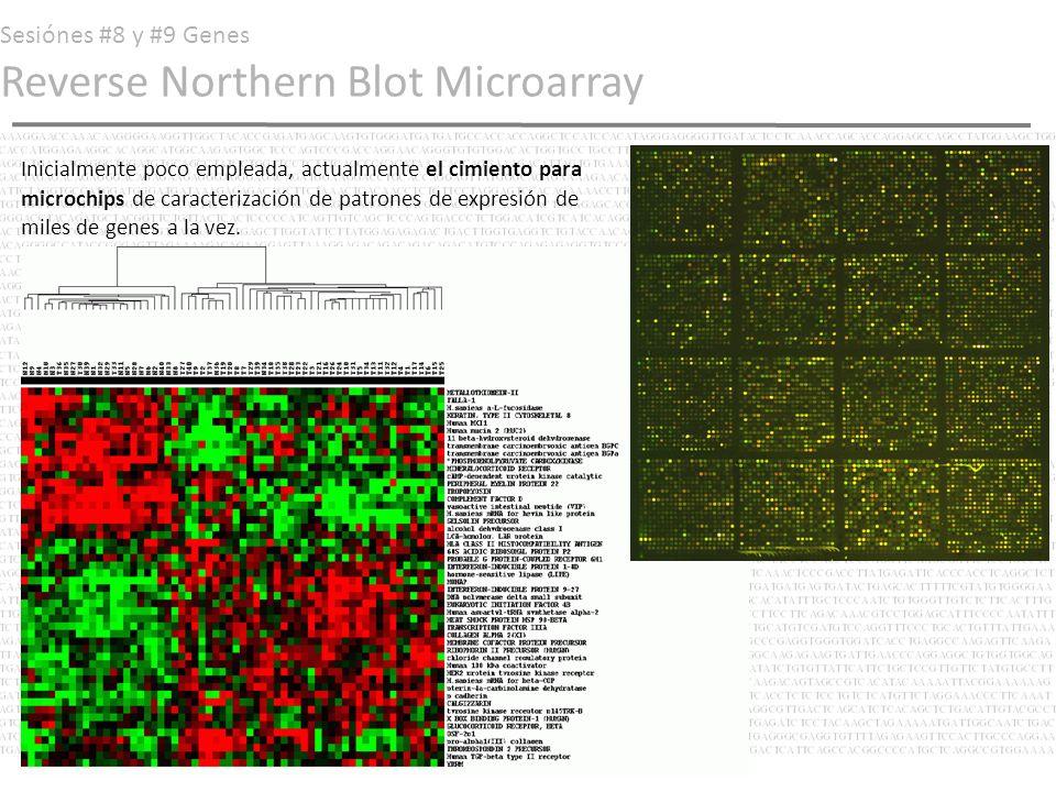 Sesiónes #8 y #9 Genes Reverse Northern Blot Microarray