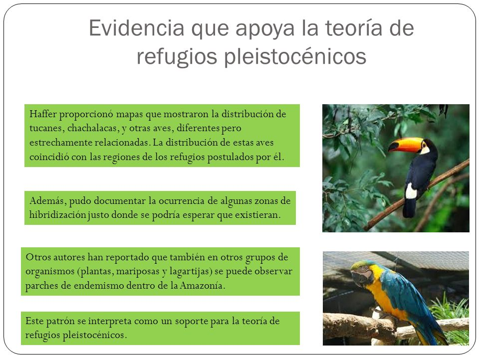 Evidencia que apoya la teoría de refugios pleistocénicos