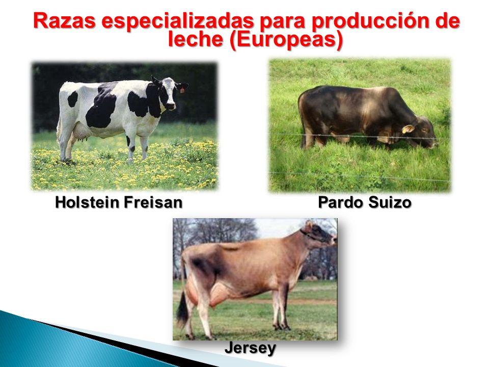 Razas especializadas para producción de leche (Europeas)