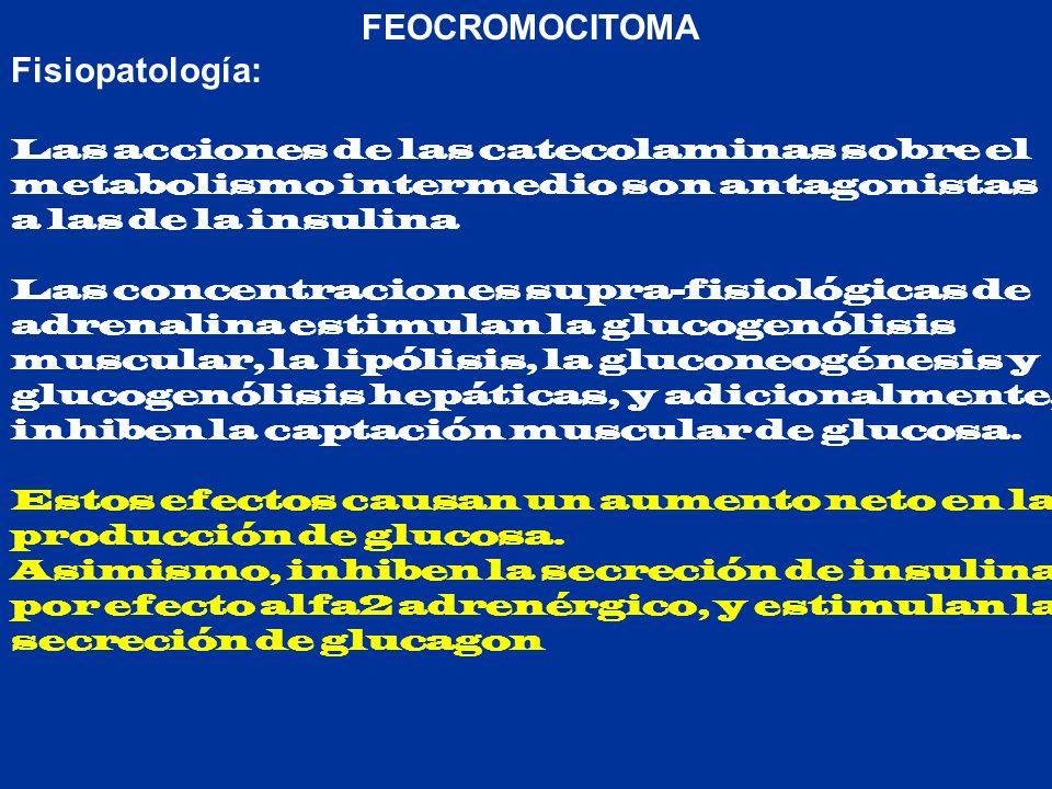 FEOCROMOCITOMA Fisiopatología: Las acciones de las catecolaminas sobre el metabolismo intermedio son antagonistas a las de la insulina.