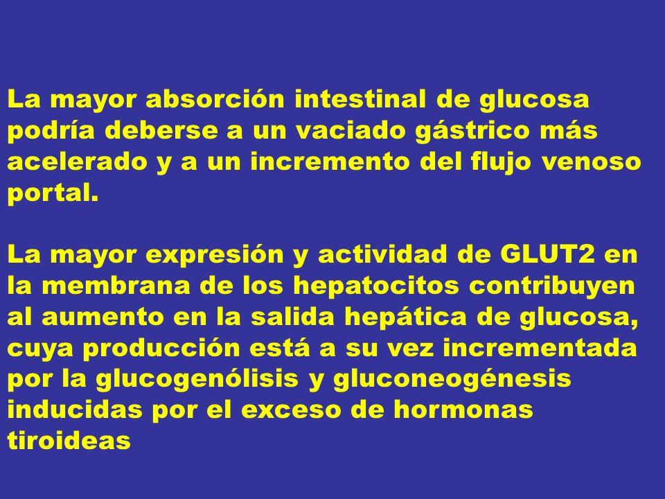 La mayor absorción intestinal de glucosa podría deberse a un vaciado gástrico más acelerado y a un incremento del flujo venoso portal.