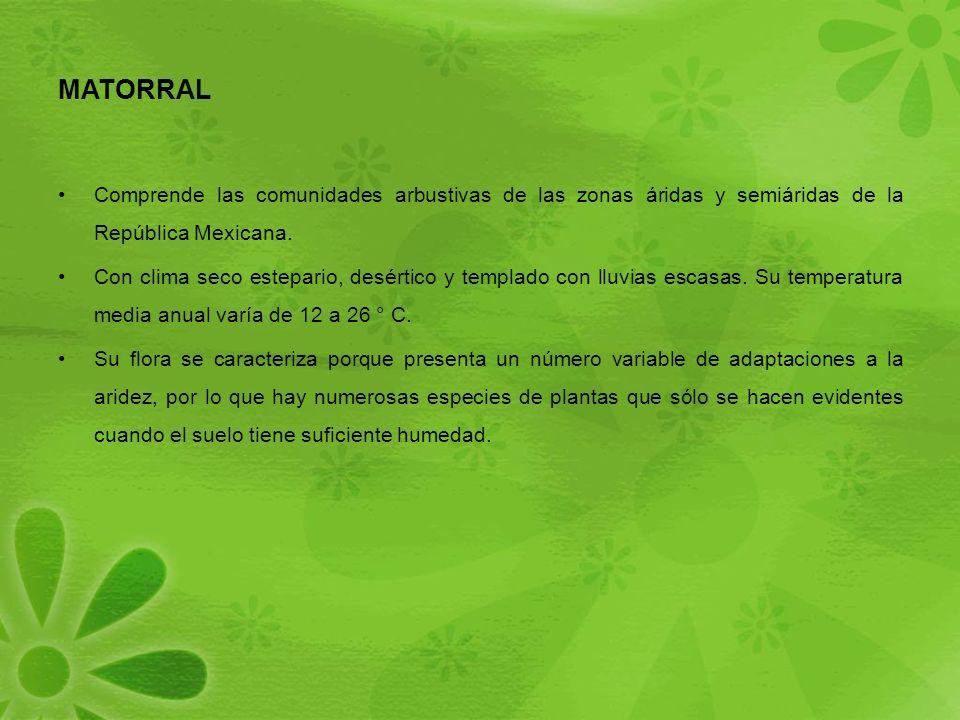 MATORRAL Comprende las comunidades arbustivas de las zonas áridas y semiáridas de la República Mexicana.